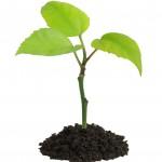 گیاهان موثر برای درمان اضطرابهایتان