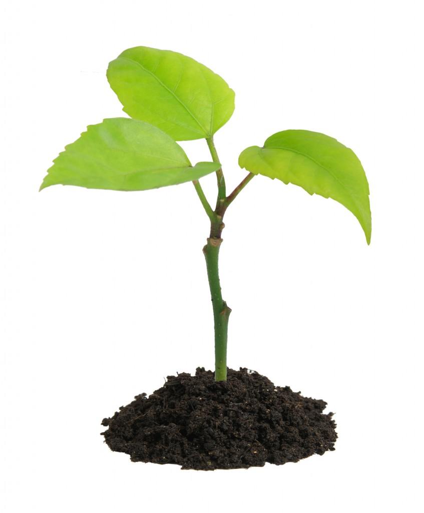 گیاهان موثر برای درمان اضطراب